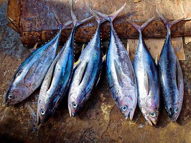 Abba artikel tonfiskar