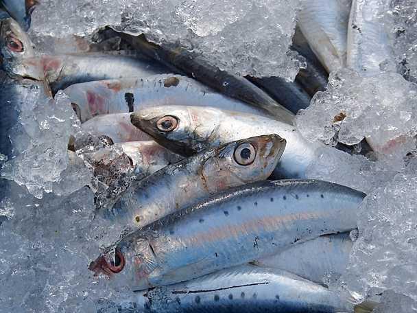 Abba färsk fisk