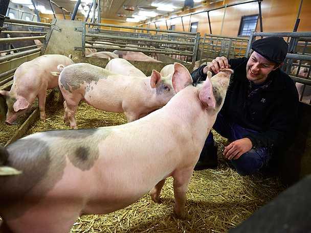 Anders griskött är exceptionellt