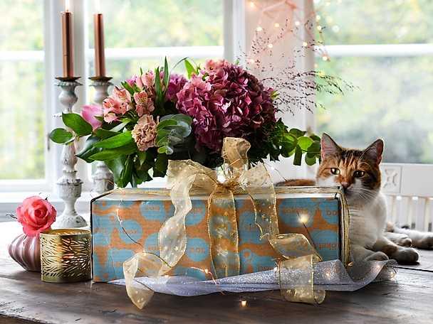 Box med katt - artikel - Julens hemligaste klapp