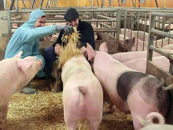 """""""Den här grisen döper jag till Tina"""""""