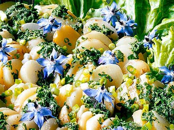 Färskpotatissallad med gurkört