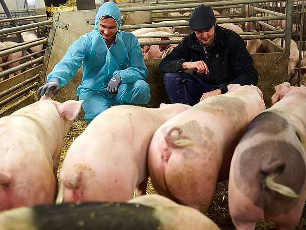Filip Poon testar på livet som grisbonde