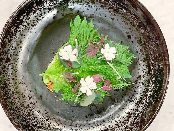 Hummer med avokado, grapefrukt, sjökorall och shisoblad