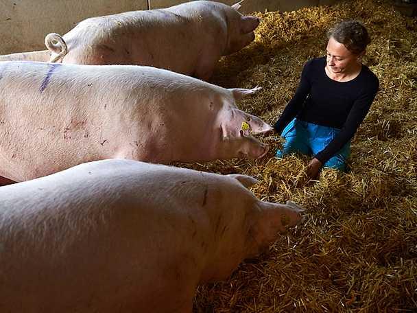 Jeanette Elander - från vd till köttbonde