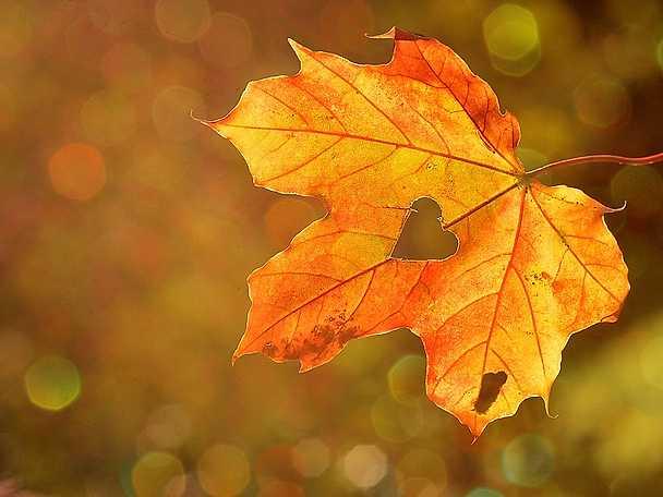 Kickstarta hösten header