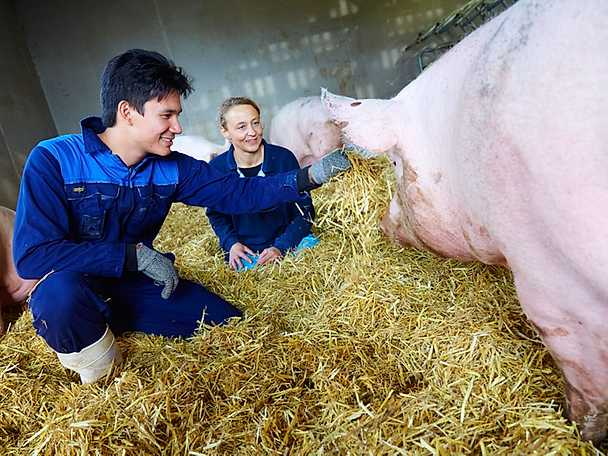 På med nytvättade stövlar för grisbesök