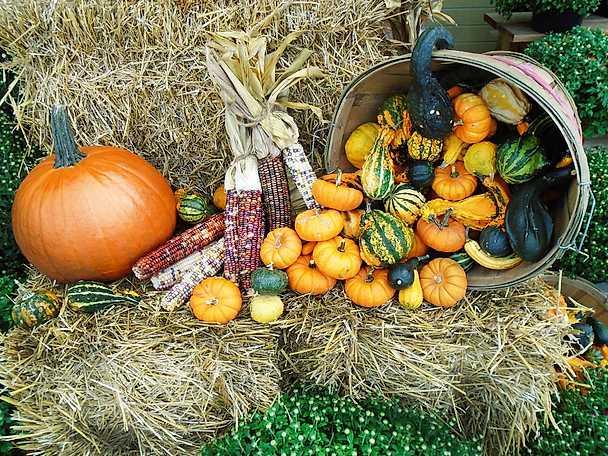 Pumpor Thanksgiving