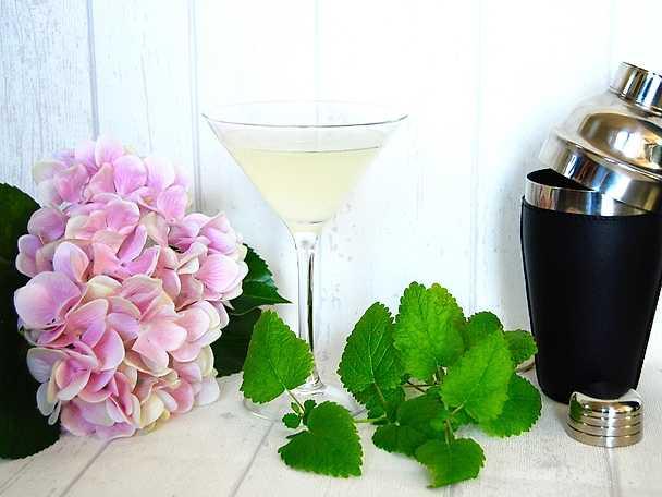 Sommardrink med gin, lime och mynta