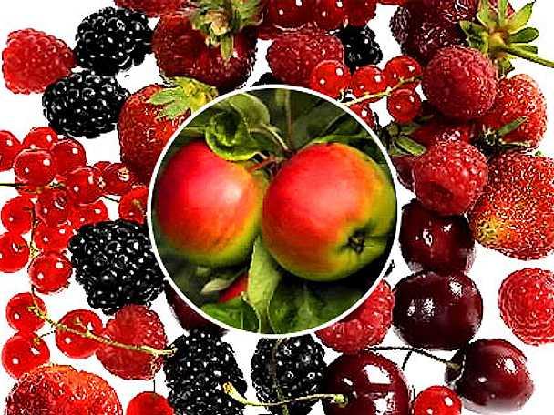 Ta vara på årets skörd av frukt och bär!