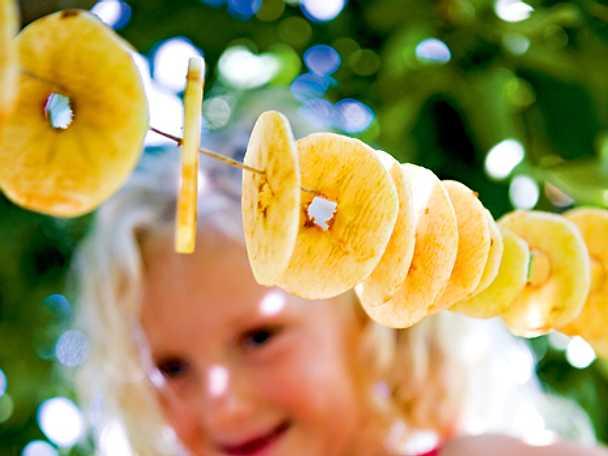 Torkade äppleringar