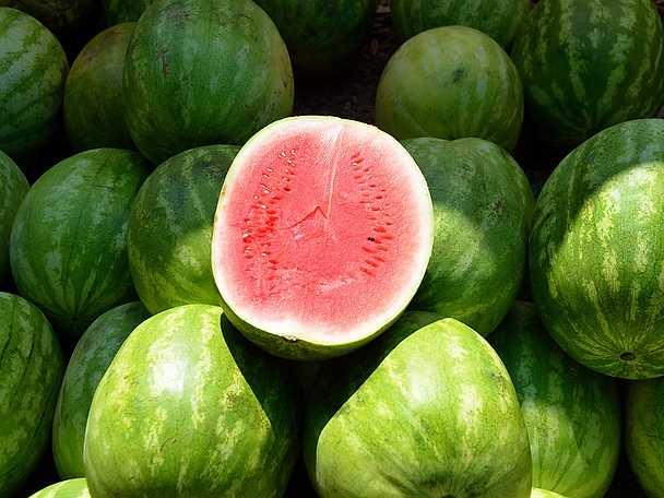 Vattenmelon omslagsbild