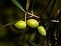 Zeta - bild oliver